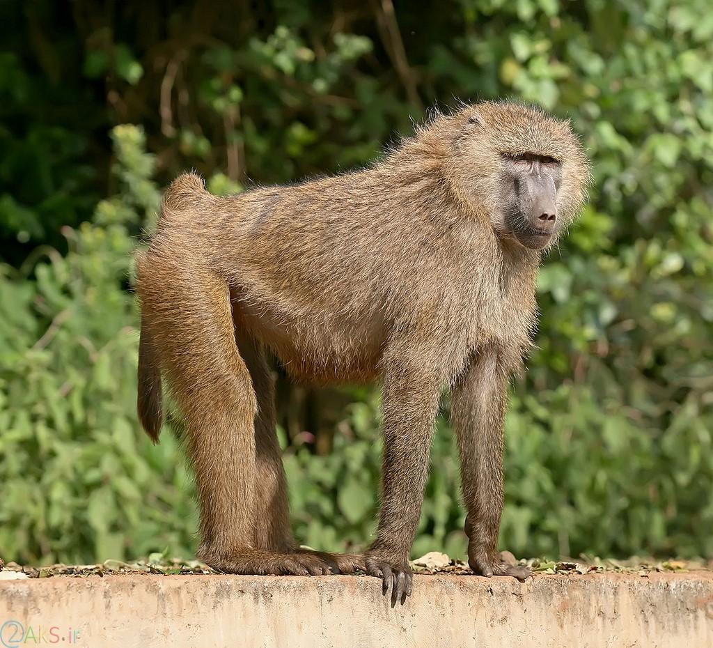 Photos Monkey