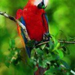 Photos Parrot