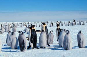 Photos Penguin