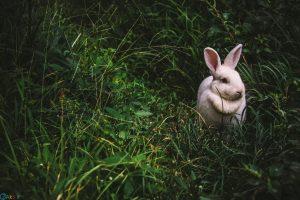 Photos Rabbit