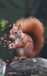 Photos Squirrel