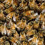 Photos bee