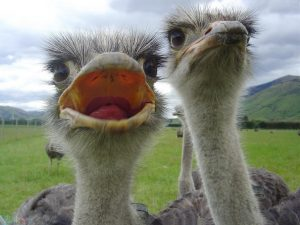 Photos ostrich