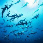 Photos shark