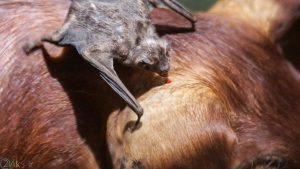 image Bat