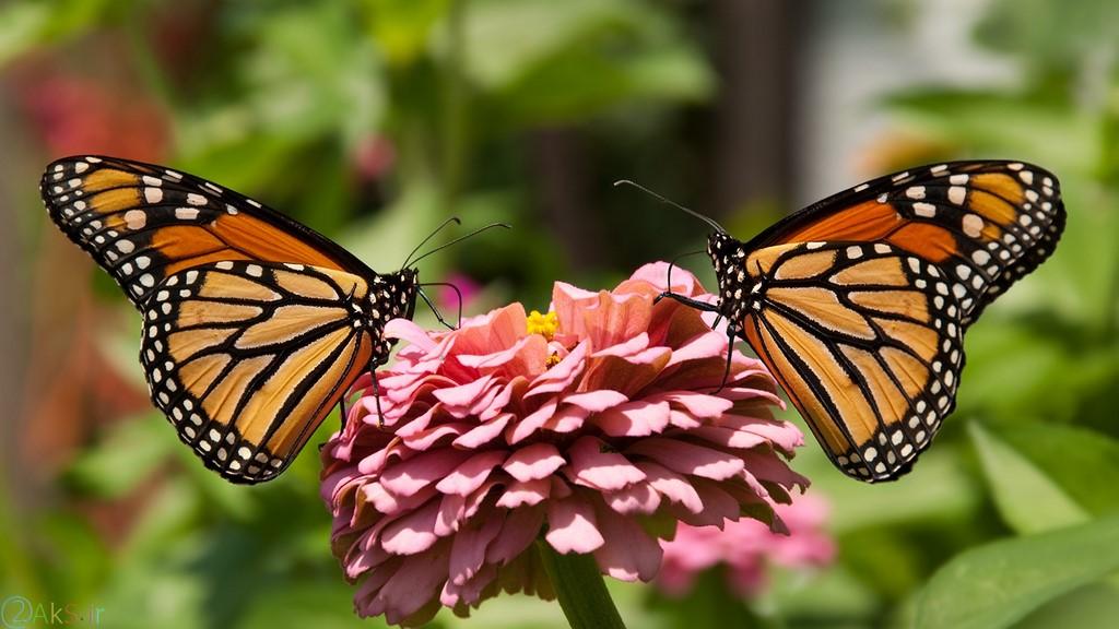 image Butterflies