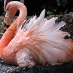 image Flamingo