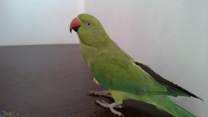 image Parrot