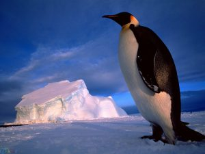 image Penguin