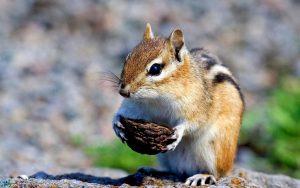 image Squirrel