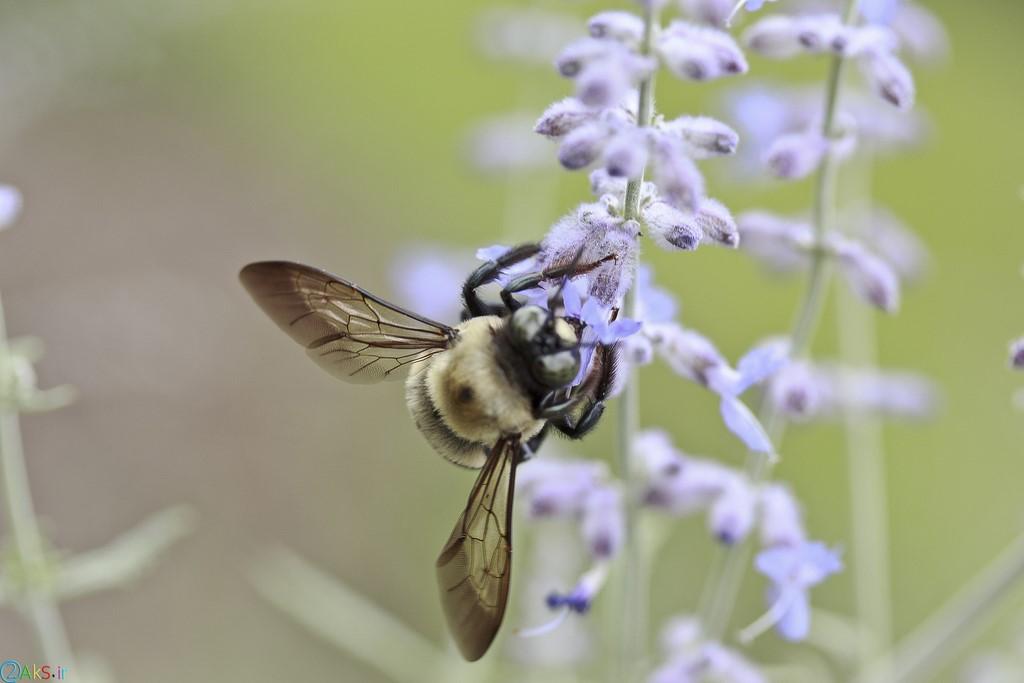 image bee