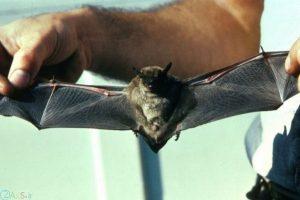 images Bat