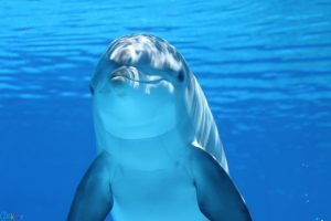 images Dolphin
