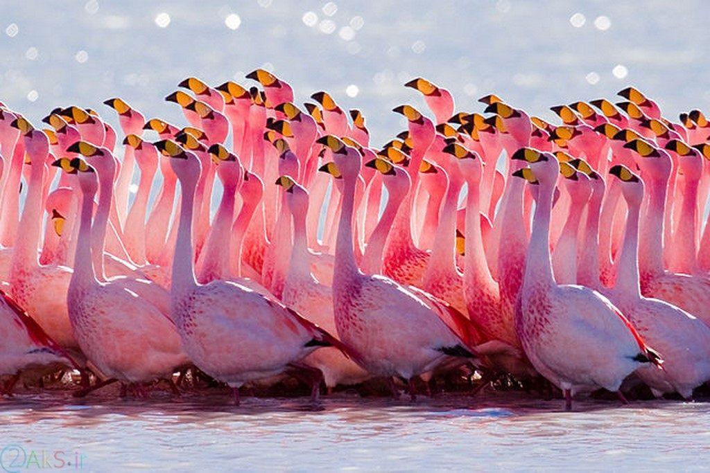 images Flamingo