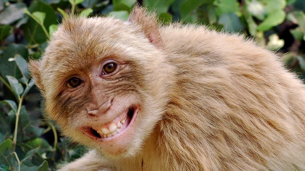 images Monkey