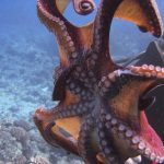 images Octopus