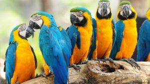 images Parrot