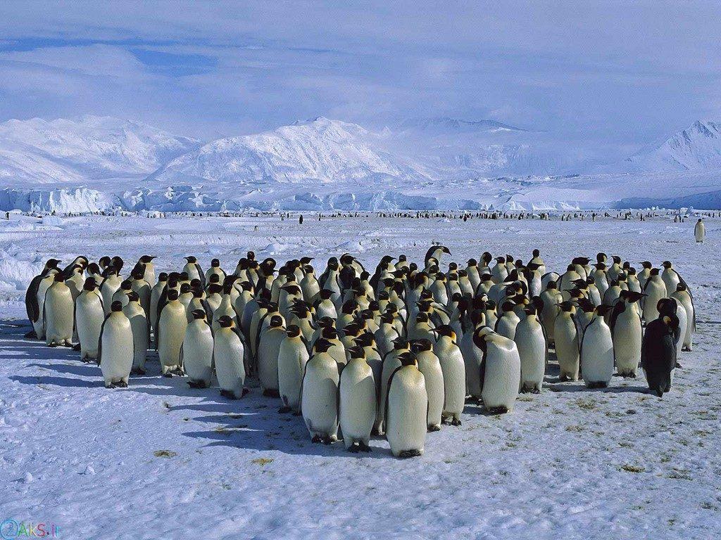 images Penguin