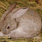 images Rabbit