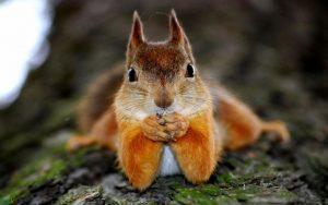 images Squirrel