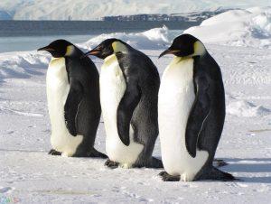 picture Penguin