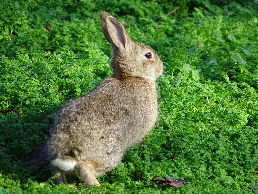 picture Rabbit