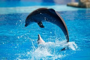 pictures Dolphin