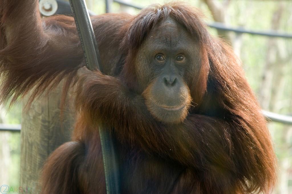 pictures Monkey