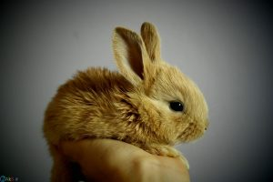 pictures Rabbit